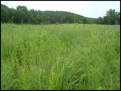prairie fen habitat in Grasshopper Hollow, Mark Twain National Forest (US Forest Service)
