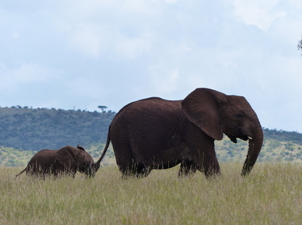 Thumbnail image for mom and babe elephant.jpg
