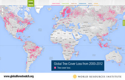 Global Tree Cover Loss~WRI.jpg