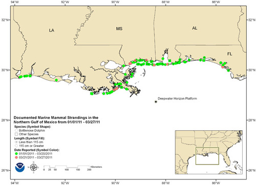 Map of bottlenose dolphin strandings since January (NOAA).jpg