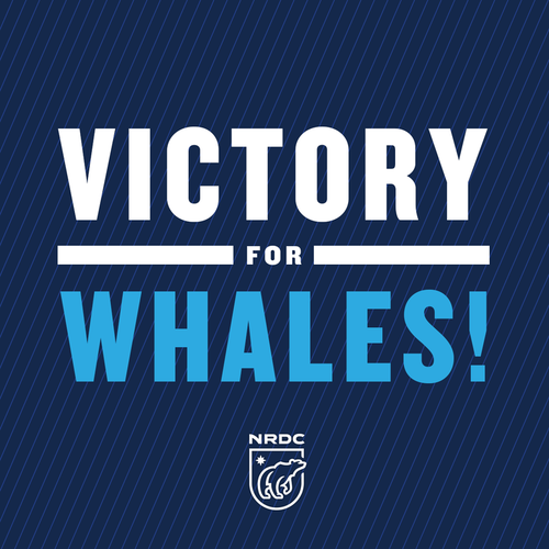 Victory for Whales.png