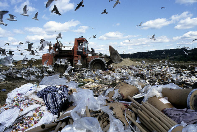 Image result for Animals scavenging a landfill
