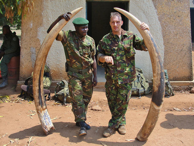 Officials holding elephant ivory