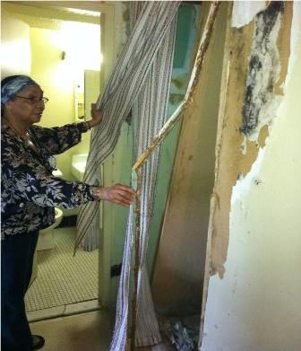 mold in house
