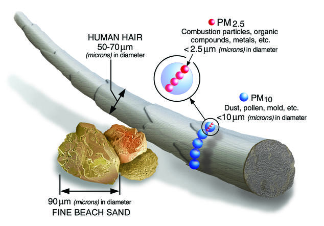 Graphic comparing the size of fine particulate pollution to a human hair.