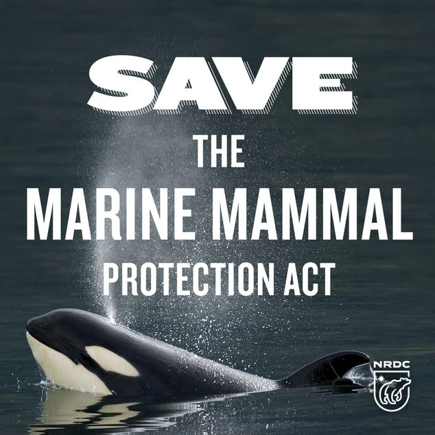 Save the MMPA!