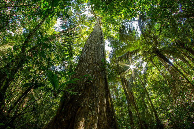 Taking a Stand for Perus OldGrowth Trees NRDC