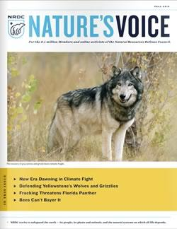Natures Voice: Fall 2015 issue cover