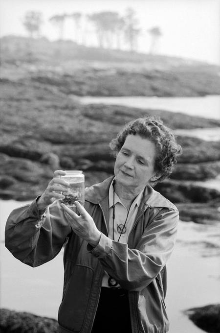 silent spring rachel carson Silent spring by rachel carson and a great selection of similar used, new and collectible books available now at abebookscom.